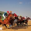 فروسية نجران تقيم حفل سباقها الـ 24 للموسم الحالي