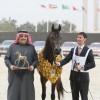 الفروسية السعودية تعانق الامجاد في قطر