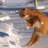 قط يتسبب في اعجاب لاعب آرسنال