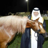 أمير مكة يرعى انطلاق بطولة جمال الخيل اليوم