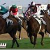 انطلاق الموسم الجديد لسباقات نادي الفروسية في الرياض